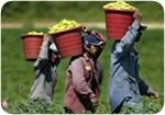 Farmworker victory in North Carolina