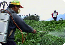 Spray pesticides