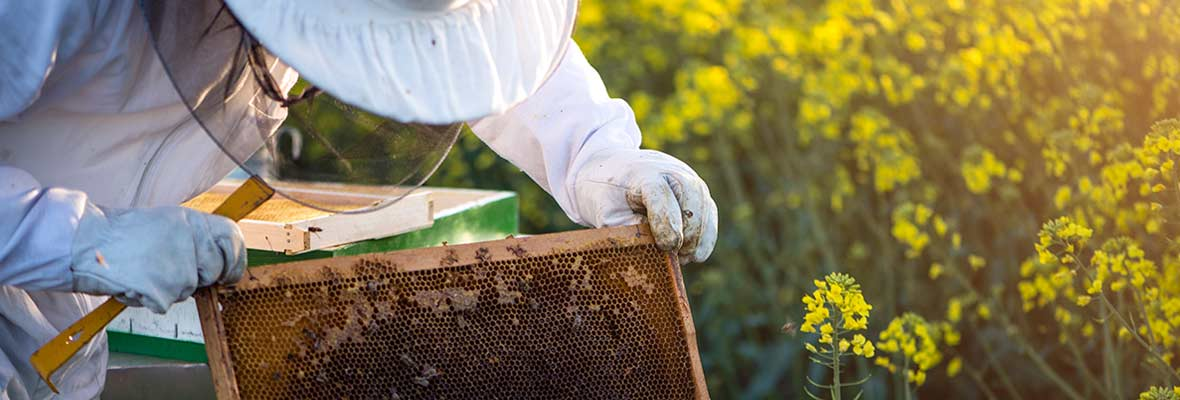 Working with bees