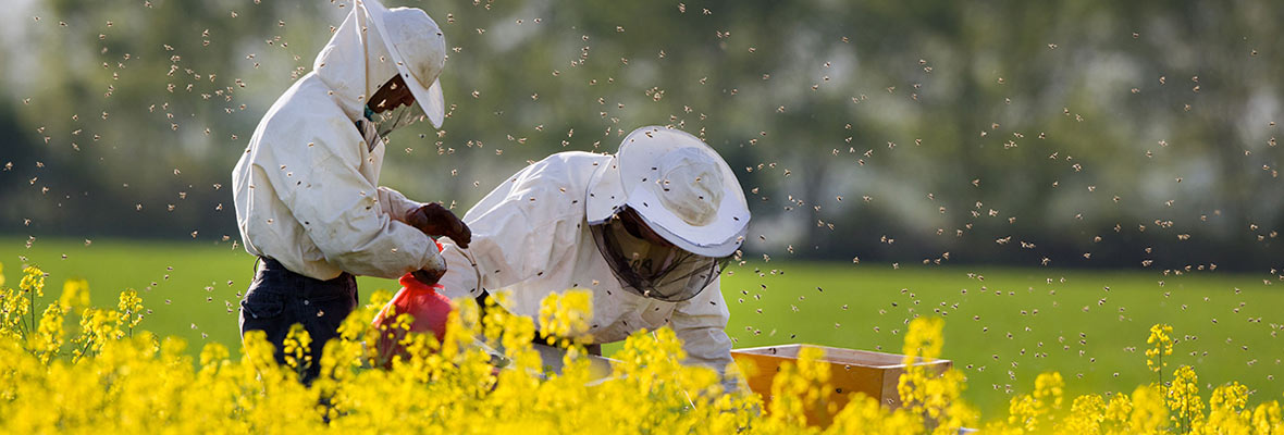 Beekeepers in field