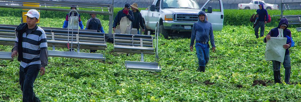 Farmworkers in field