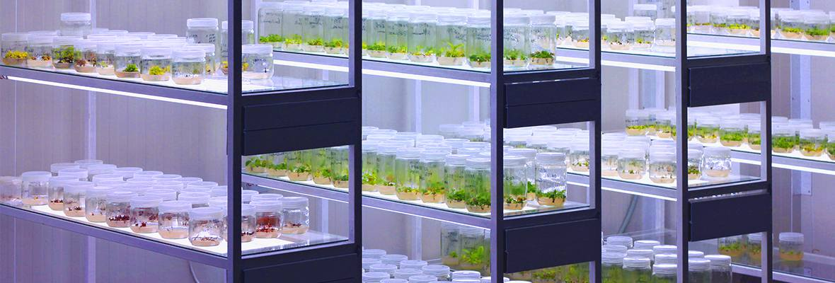 Seeds in a laboratory