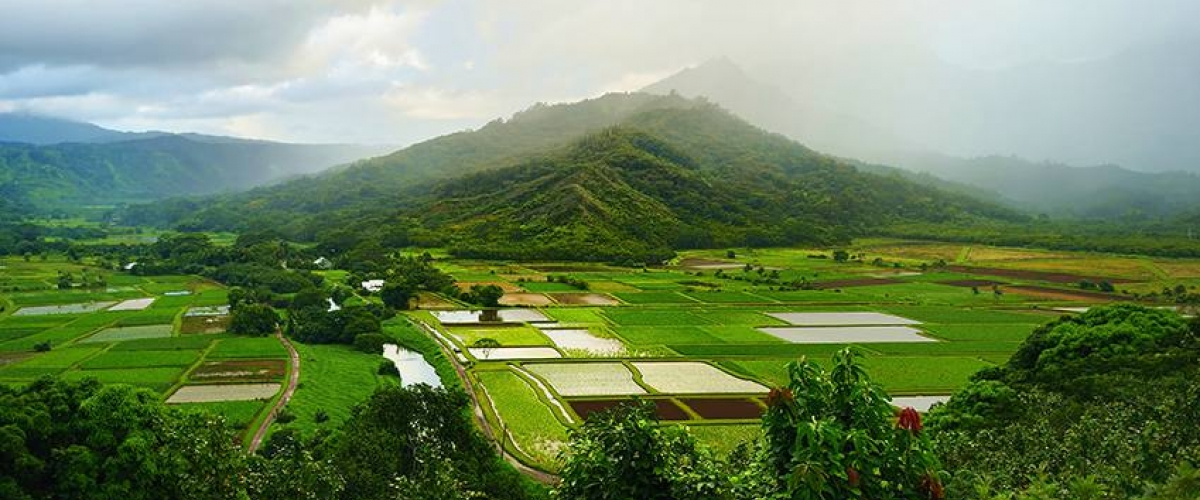 Farm in Hawaii