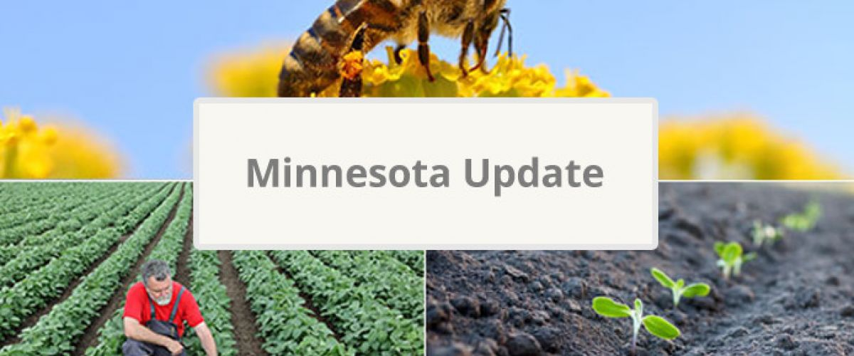Minnesota Update