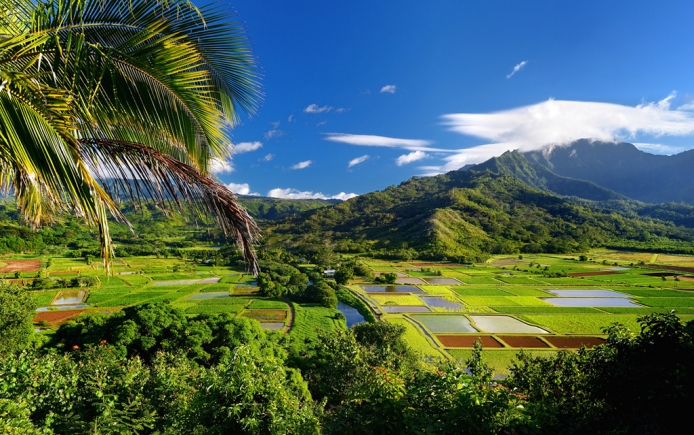 Hawaii-fields