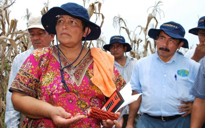 Mexican corn farmer