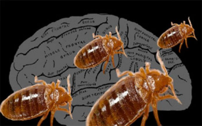 ddt for bed bugs pesticide action network With ddt bed bugs