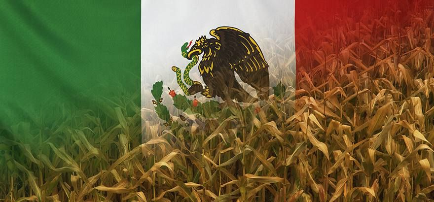 Mexico flag farm corn