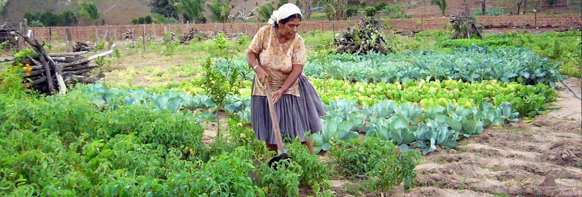 International agroecology