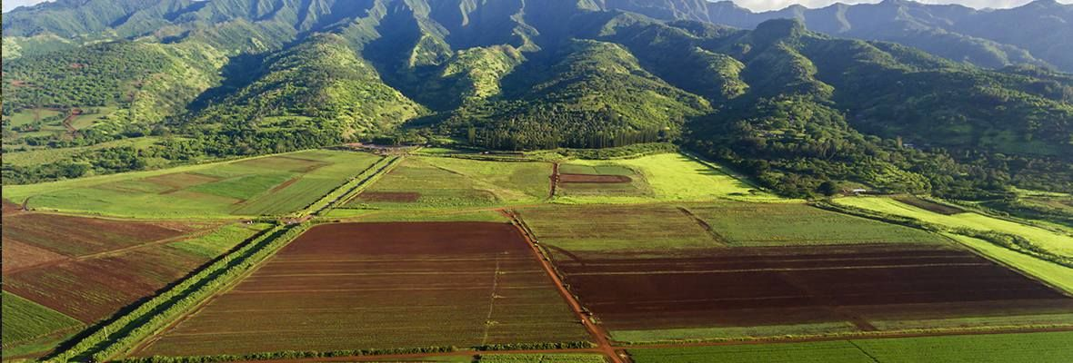 Hawaii farmland