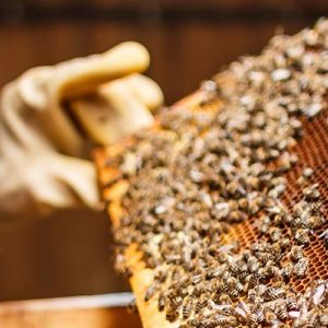 Honey bees hive