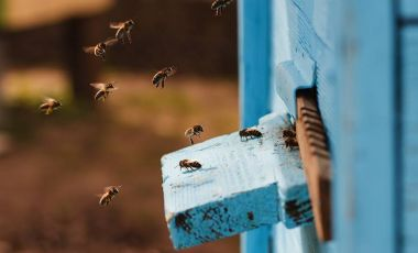 Save Our Bees | Pesticide Action Network