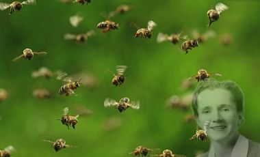 Bees and Rachel Carson