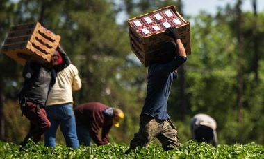 Farmworker working
