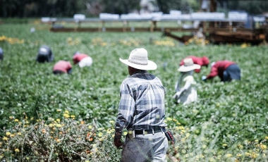 Farmworker in field