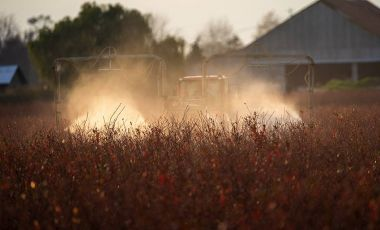 The Lynchpin of Industrial Ag | Pesticide Action Network