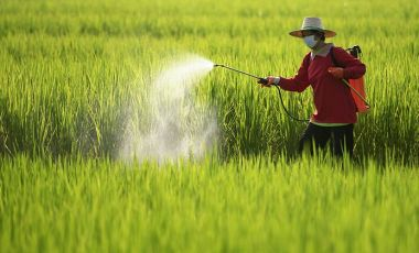 Thailand pesticides