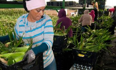 Farmworkers in California