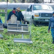 Farmworkers California