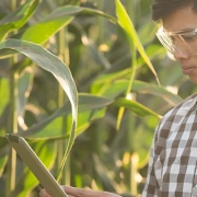 Scientist farm atrazine