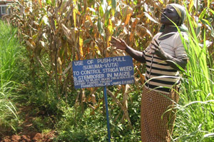 Consolata James, push-pull farmer in Kenya