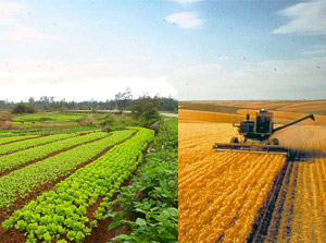 Organic and conventional farming