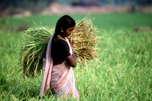 Woman with rice in India